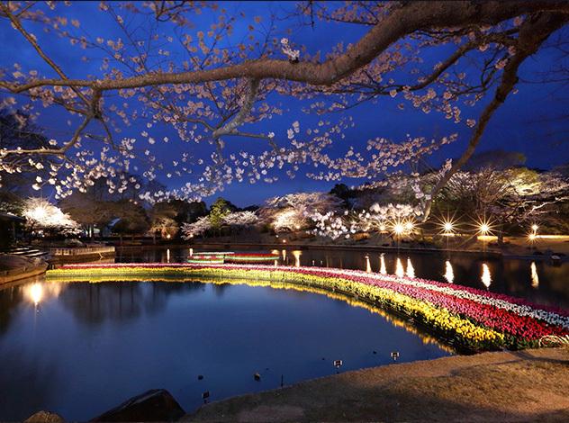 02夜桜(はままつフラワーパーク).jpg
